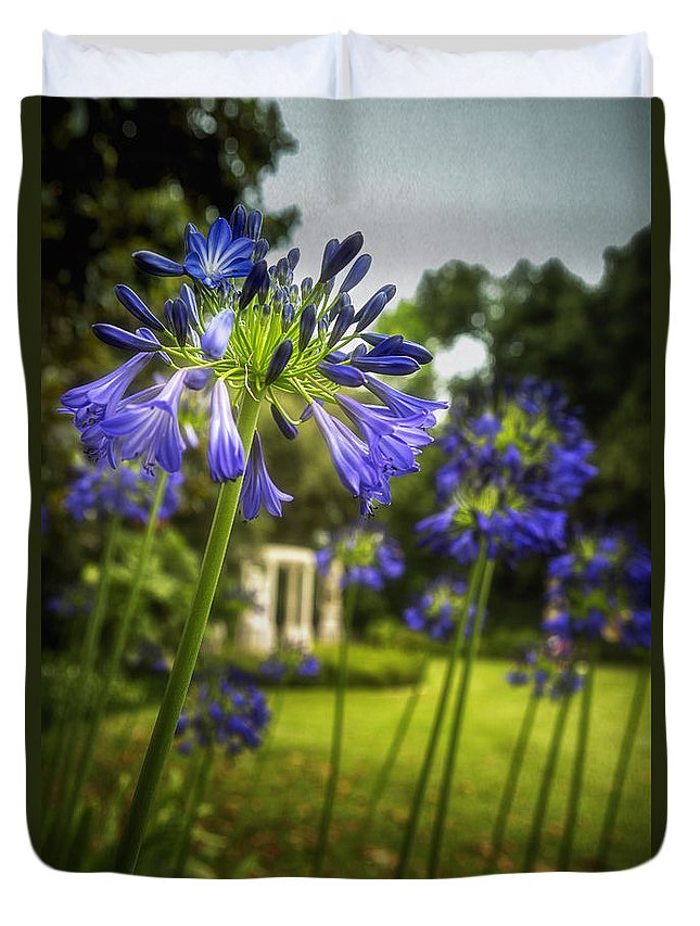 Agapanthus Duvet Cover featuring the photograph Agapanthus In The Garden by Belinda Greb