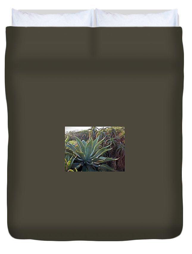 Agave Duvet Cover featuring the photograph Agave At Sunset by Douglas Barnett