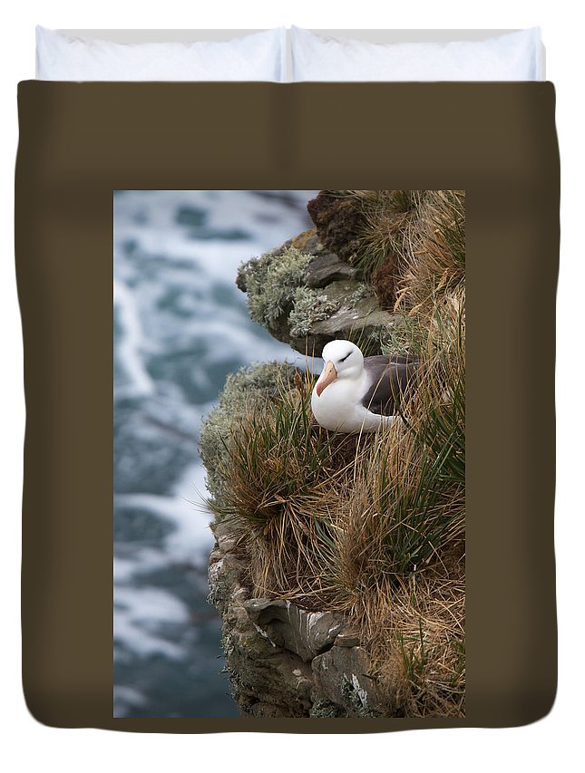 Falkland Islands Duvet Cover featuring the photograph Albatross Rookery by David Beebe