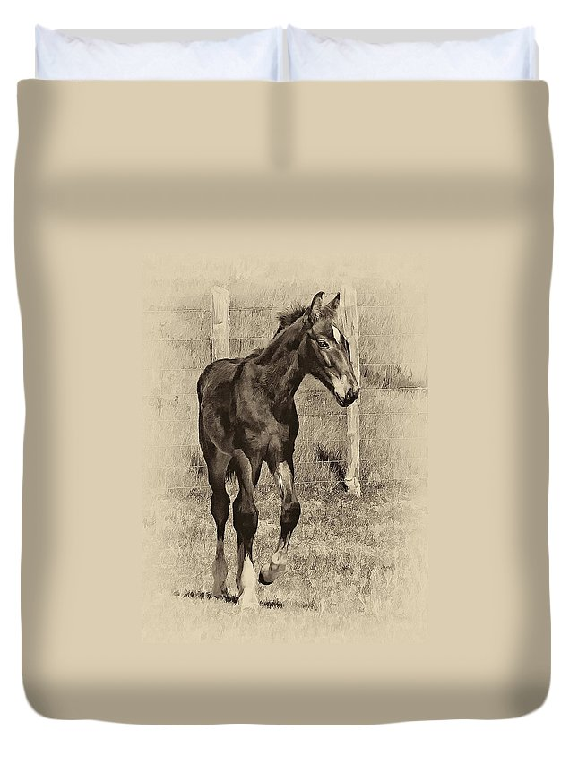Horse Duvet Cover featuring the photograph All Legs Sepia by Steve Harrington