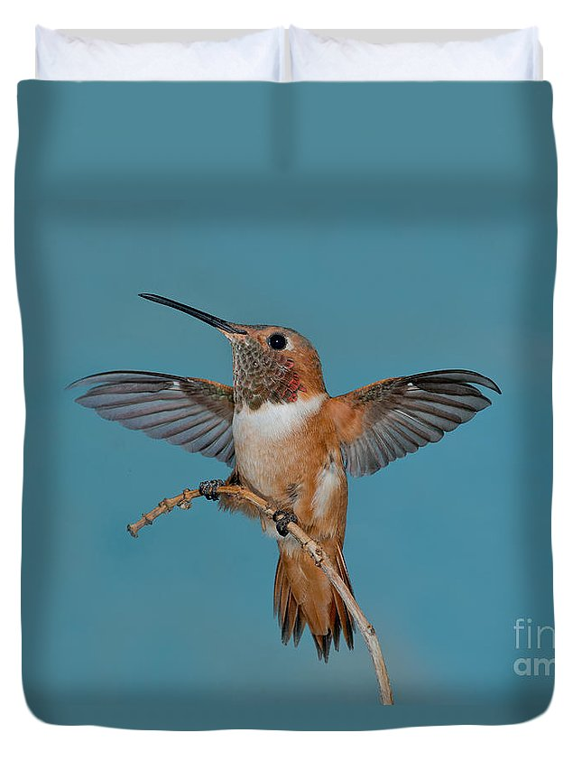Selasphorus Sasin Duvet Cover featuring the photograph Allens Hummer by Anthony Mercieca