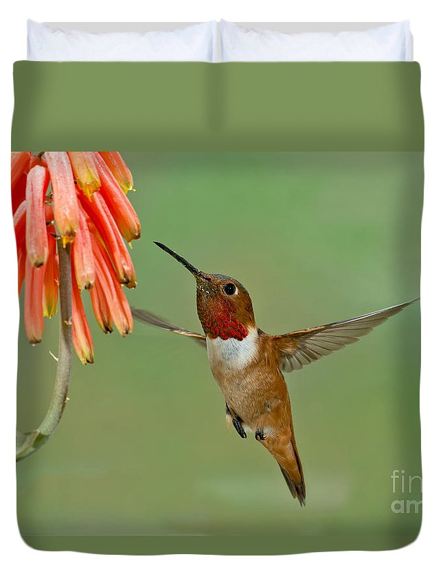Allen's Hummingbird Duvet Cover featuring the photograph Allens Hummingbird At Flowers by Anthony Mercieca