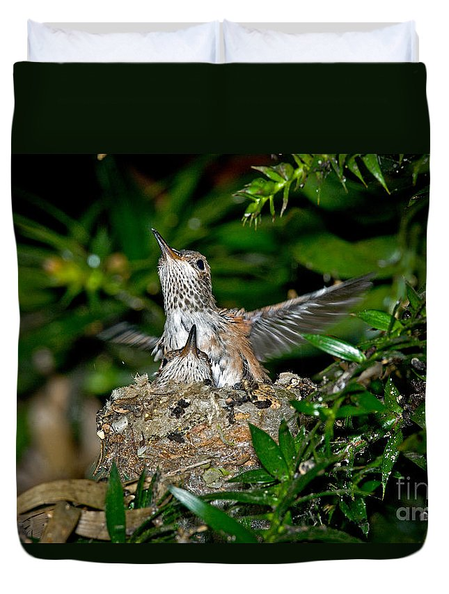 Animal Duvet Cover featuring the photograph Allens Hummingbird Chicks by Anthony Mercieca