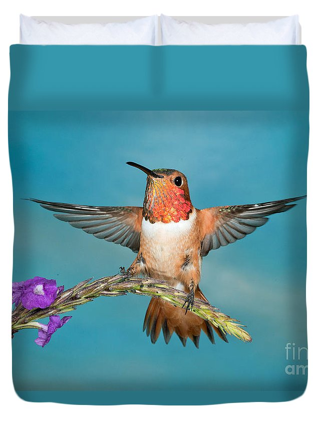 Selasphorus Sasin Duvet Cover featuring the photograph Allens Hummingbird Male by Anthony Mercieca
