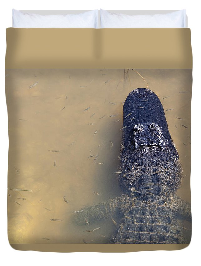 Alligator Duvet Cover featuring the photograph Alligator And Fishes by Alex Potemkin