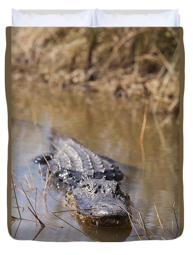 Alligator Duvet Cover featuring the photograph Alligator In Evergrades by Alex Potemkin