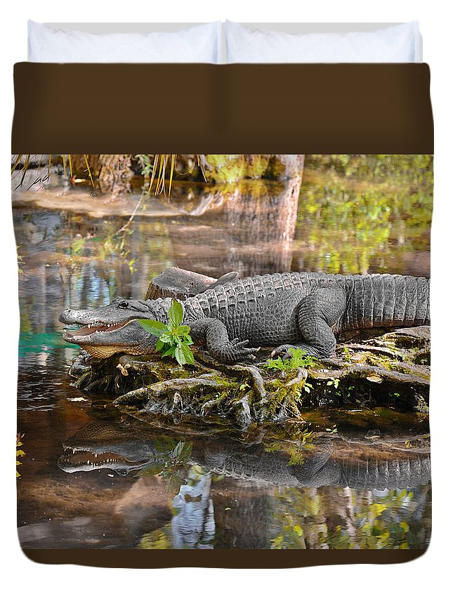 American Duvet Cover featuring the photograph Alligator mississippiensis by Alexandra Till