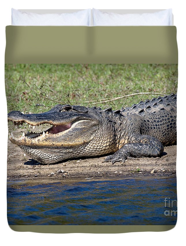 Animal Duvet Cover featuring the photograph Alligator Sunning by Anthony Mercieca
