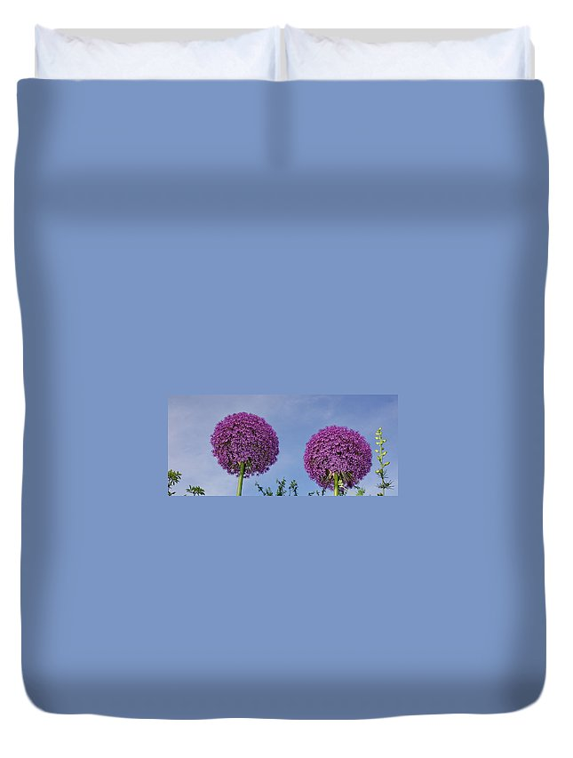 Purple Duvet Cover featuring the photograph Allium Flowers by Alan Hutchins