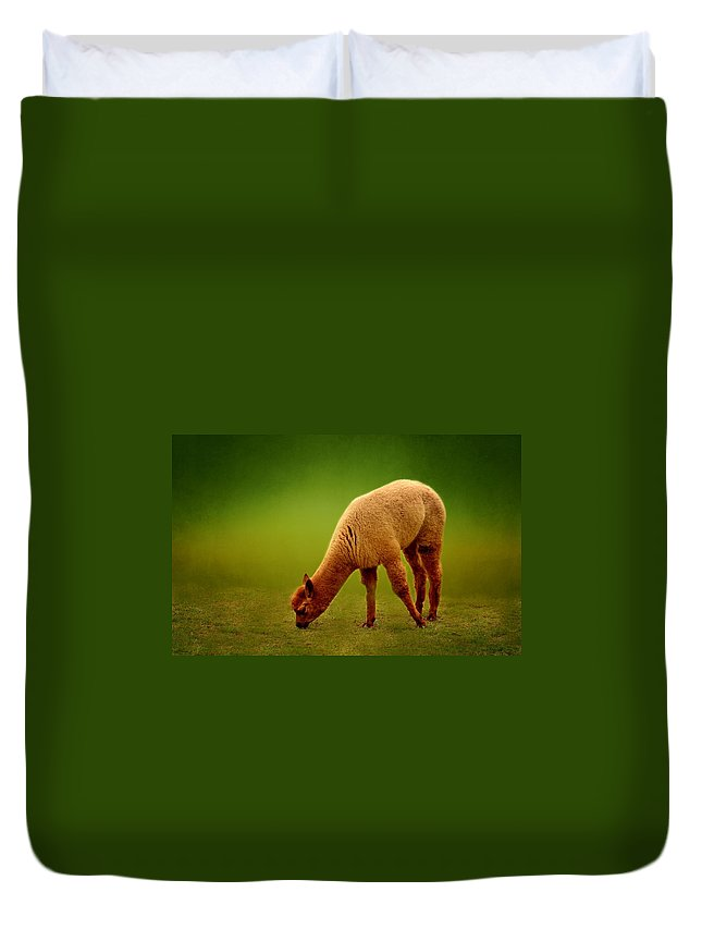 Alpaca Duvet Cover featuring the photograph Alpaca by Heike Hultsch
