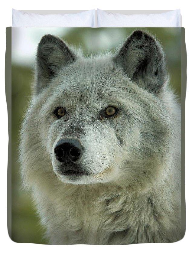 Alpha Wolf Duvet Cover featuring the photograph Alpha Curiosity by Adam Jewell
