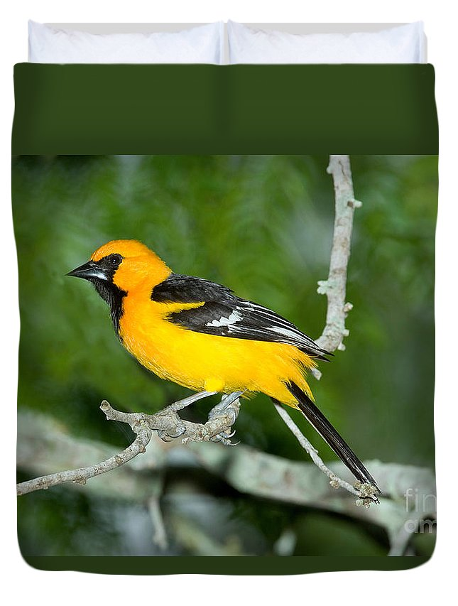 Animal Duvet Cover featuring the photograph Altamira Oriole by Anthony Mercieca