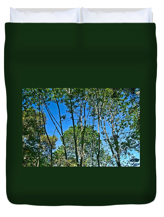 Reflection Duvet Cover featuring the photograph Alternate Reality - Reflected View Of The Forest From A Pond In Garland Ranch Park In Carmel Valley. by Jamie Pham