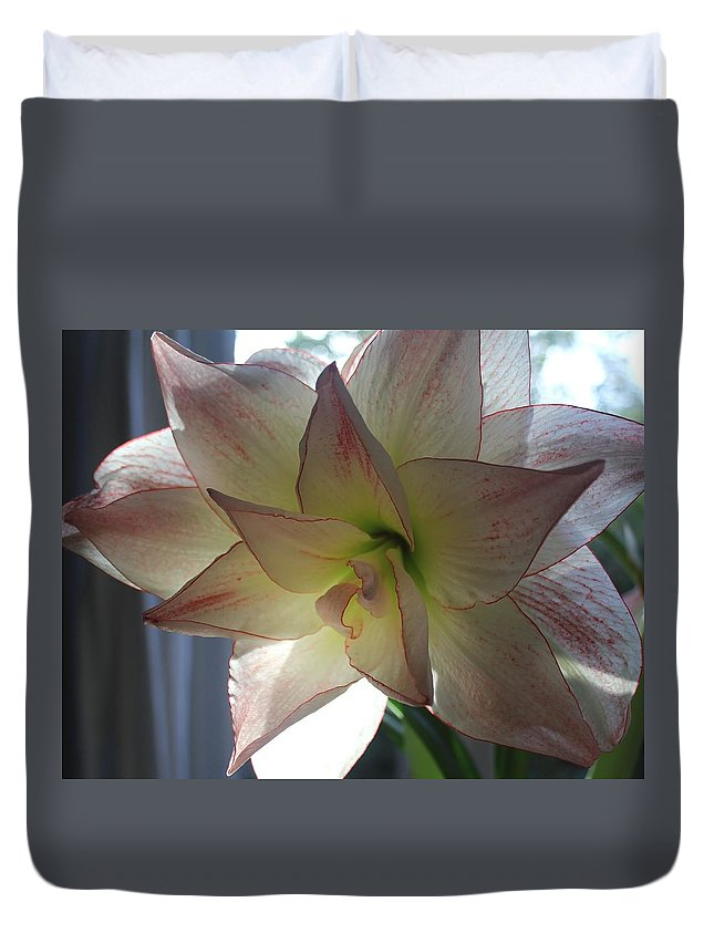 Amaryllis Duvet Cover featuring the photograph Amaryllis by Mo Barton