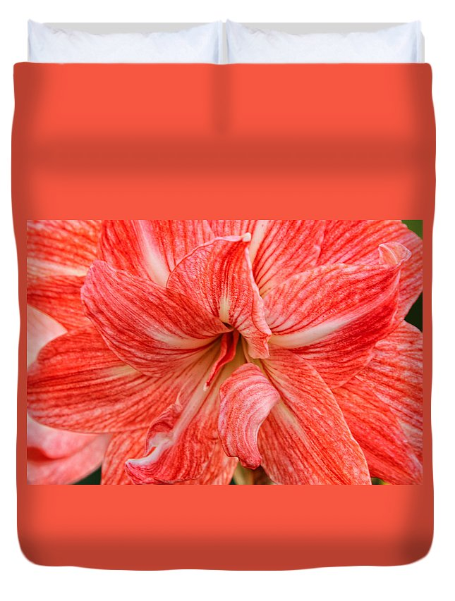 Amaryllis Undefined Duvet Cover featuring the photograph Amaryllis Undefined by Rachel Cohen