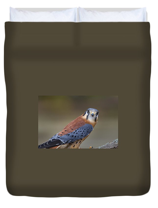 Agile Duvet Cover featuring the photograph America Kestral by Jack R Perry