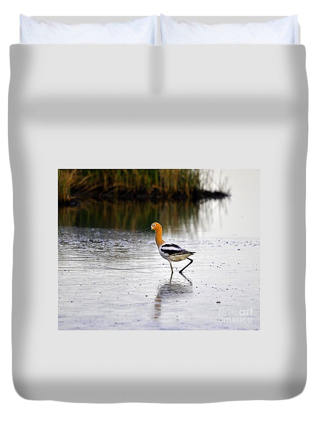 Wading Bird Duvet Cover featuring the photograph American Avocet by Al Powell Photography USA