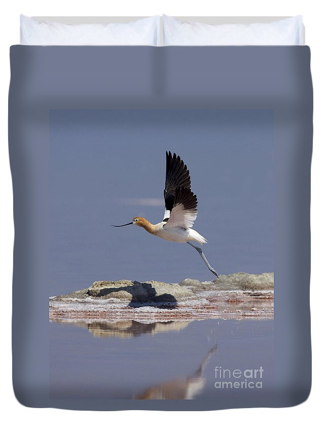 American Avocet Duvet Cover featuring the photograph American Avocet by Anthony Mercieca