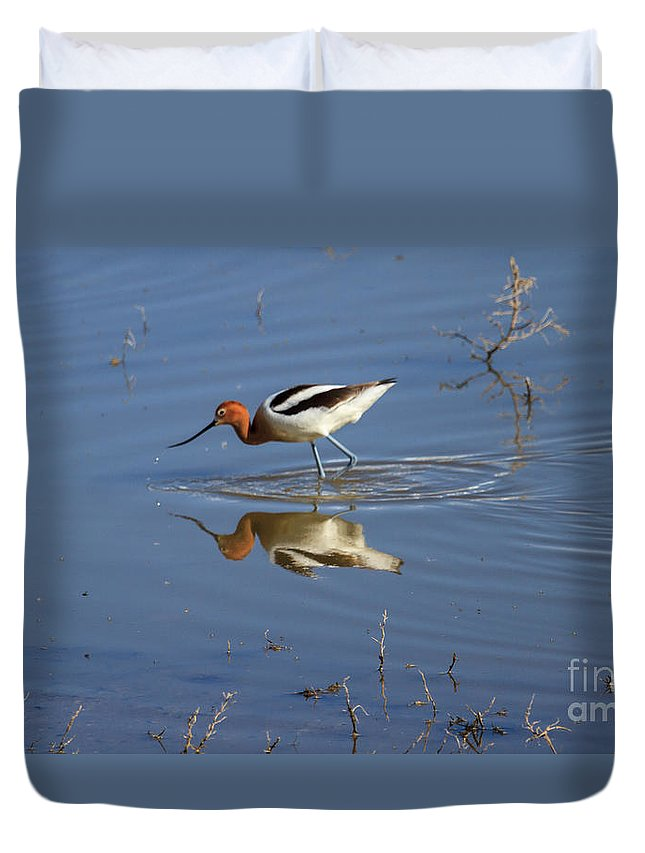 Wildlife Duvet Cover featuring the photograph American Avocet by Robert Bales