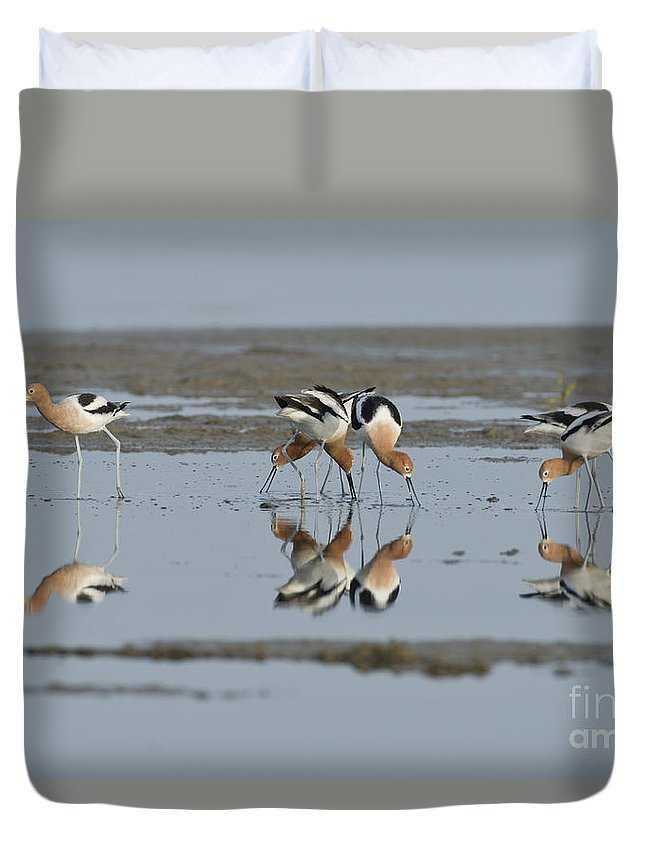 American Avocet Duvet Cover featuring the photograph American Avocets by Anthony Mercieca