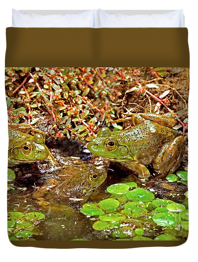 Animal Duvet Cover featuring the photograph American Bullfrogs Rana Catesbeiana by Anthony Mercieca