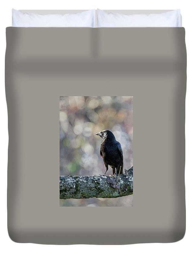 Crow Duvet Cover featuring the photograph American Crow by Bill Wakeley