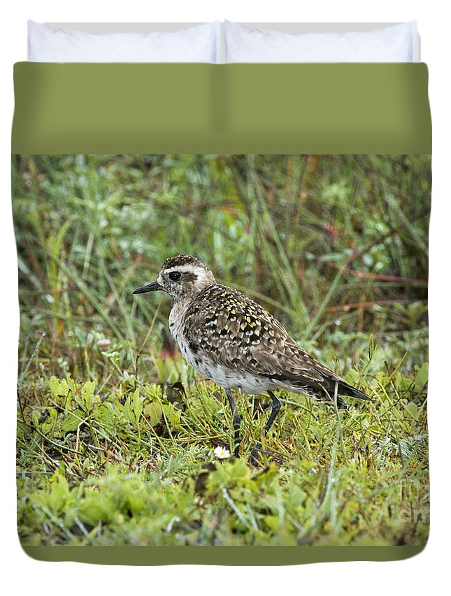 American Golden Plover Duvet Cover featuring the photograph American Golden Plover by Anthony Mercieca