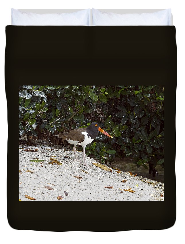American Oystercatcher Duvet Cover featuring the photograph American Oystercatcher by Sally Weigand