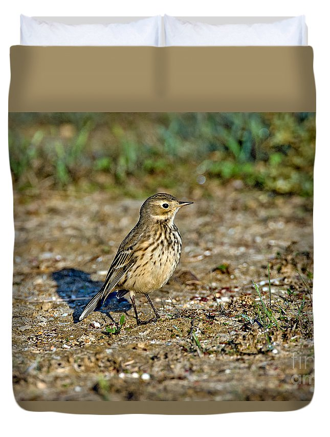 Animal Duvet Cover featuring the photograph American Pipit by Anthony Mercieca