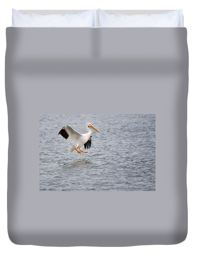Roy Williams Duvet Cover featuring the photograph American White Pelican Water Landing 2 by Roy Williams