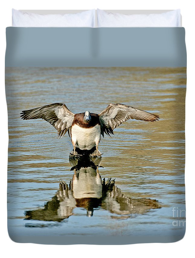 Fauna Duvet Cover featuring the photograph American Wigeon Drake by Anthony Mercieca