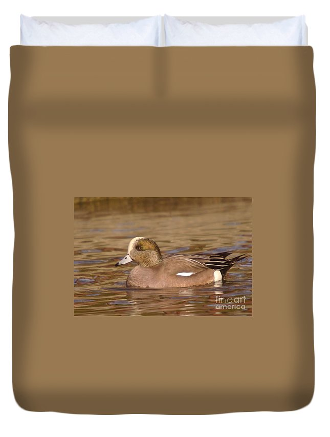 Ducks Duvet Cover featuring the photograph American Wigeon by Jeff Swan