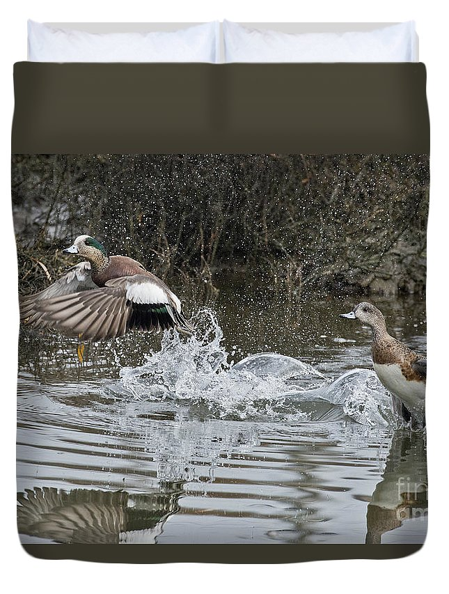 American Wigeon Duvet Cover featuring the photograph American Wigeon Pair by Anthony Mercieca
