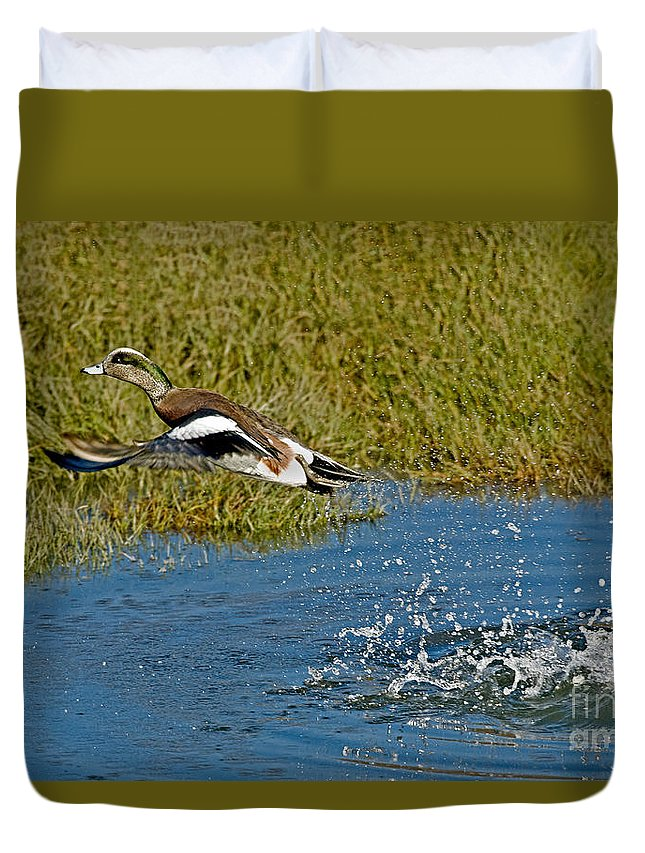 Fauna Duvet Cover featuring the photograph American Wigeon Taking Off by Anthony Mercieca
