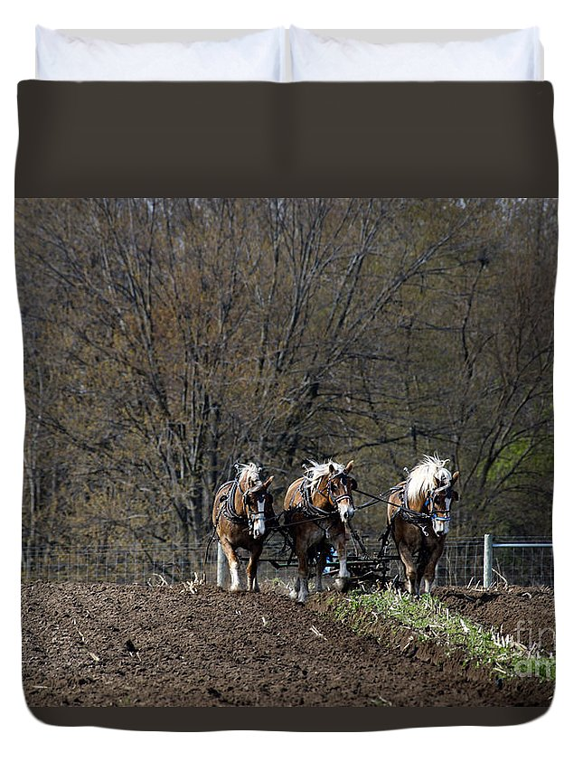 Amish Duvet Cover featuring the photograph Amish Horses At Work by David Arment
