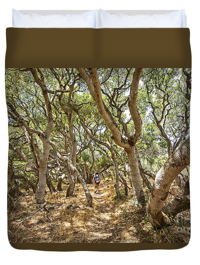 Los Osos Oak State Natural Reserve Duvet Cover featuring the photograph Among The Trees - The Mysterious Trees Of The Los Osos Oak Reserve by Jamie Pham