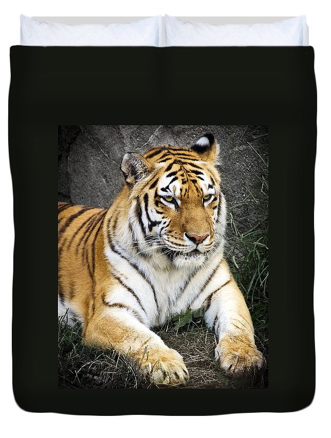 3scape Photos Duvet Cover featuring the photograph Amur Tiger by Adam Romanowicz