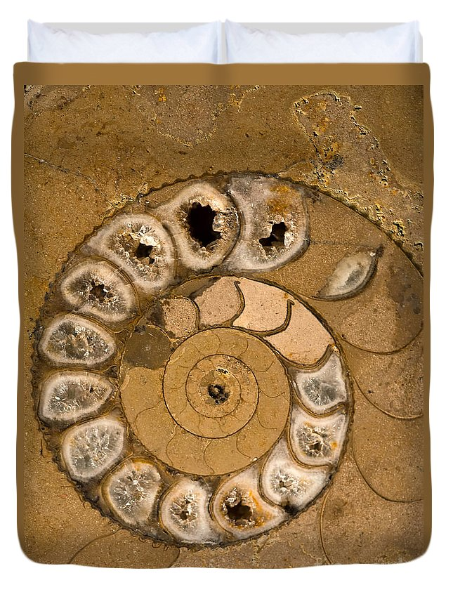 Ammonite Duvet Cover featuring the photograph An Ancient Treasure V by Jaroslaw Blaminsky