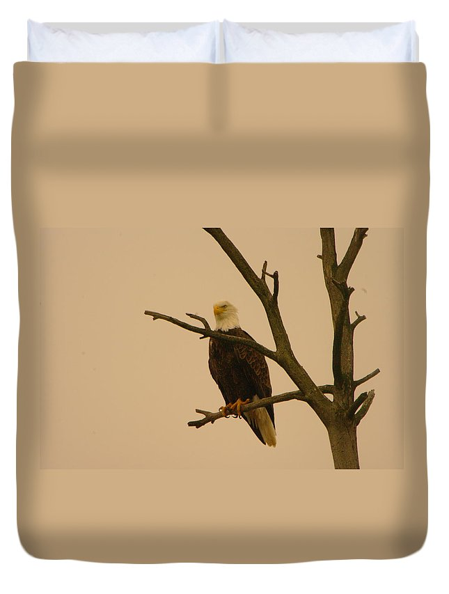 Eagles Duvet Cover featuring the photograph An Eagle In An Old Snag by Jeff Swan