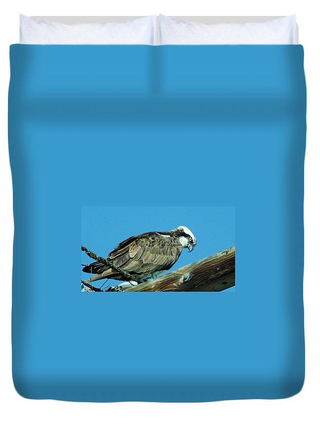 Eagles Duvet Cover featuring the photograph An Osprey by Jeff Swan