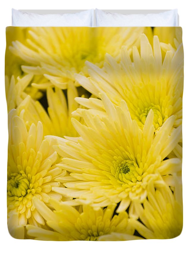 Flower Duvet Cover featuring the photograph Anastasia Sunny by Maj Seda
