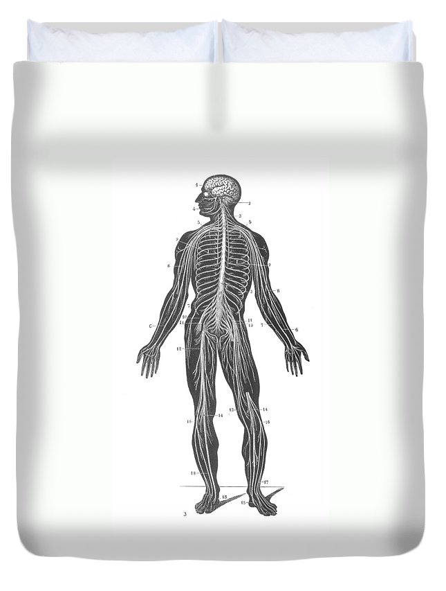 1890s Duvet Cover featuring the photograph Anatomy: Nervous System by Granger