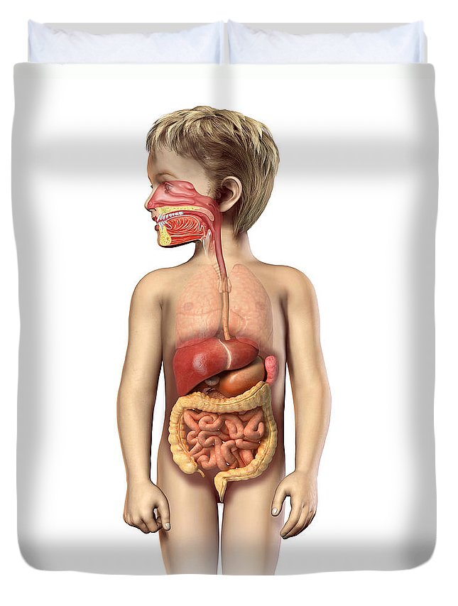 Anatomy Duvet Cover featuring the digital art Anatomy Of A Childs Full Digestive by Leonello Calvetti
