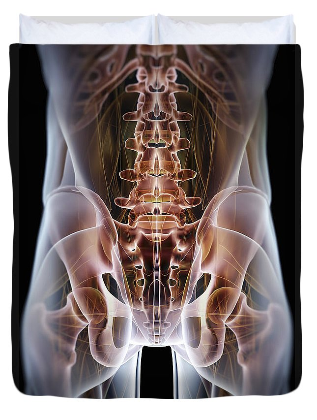 Transparency Duvet Cover featuring the photograph Anatomy Of The Hip Bones by Science Picture Co