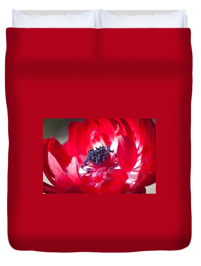 Anemone Coronaria Duvet Cover featuring the photograph Anemone Coronaria by Lynne Jenkins