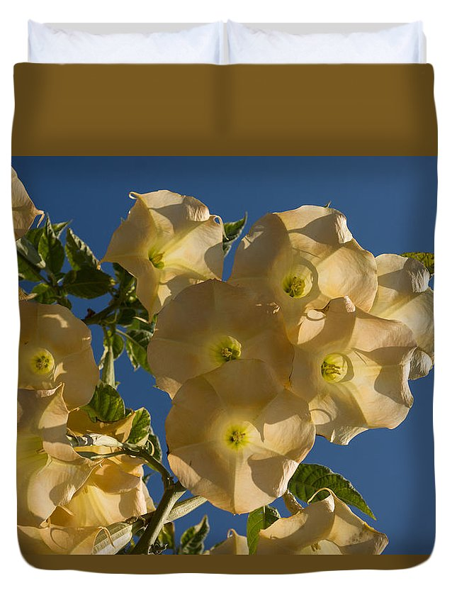Angel Trumpets Duvet Cover featuring the photograph Angel Trumpets In The Sky by Georgia Mizuleva