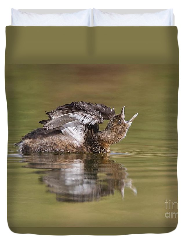 Grebe Duvet Cover featuring the photograph Angry Grebe by Bryan Keil