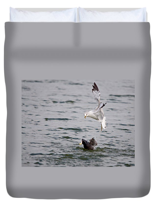 Roy Williams Duvet Cover featuring the photograph Angry Gull by Roy Williams