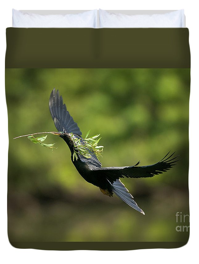 Animal Duvet Cover featuring the photograph Anhinga by Anthony Mercieca