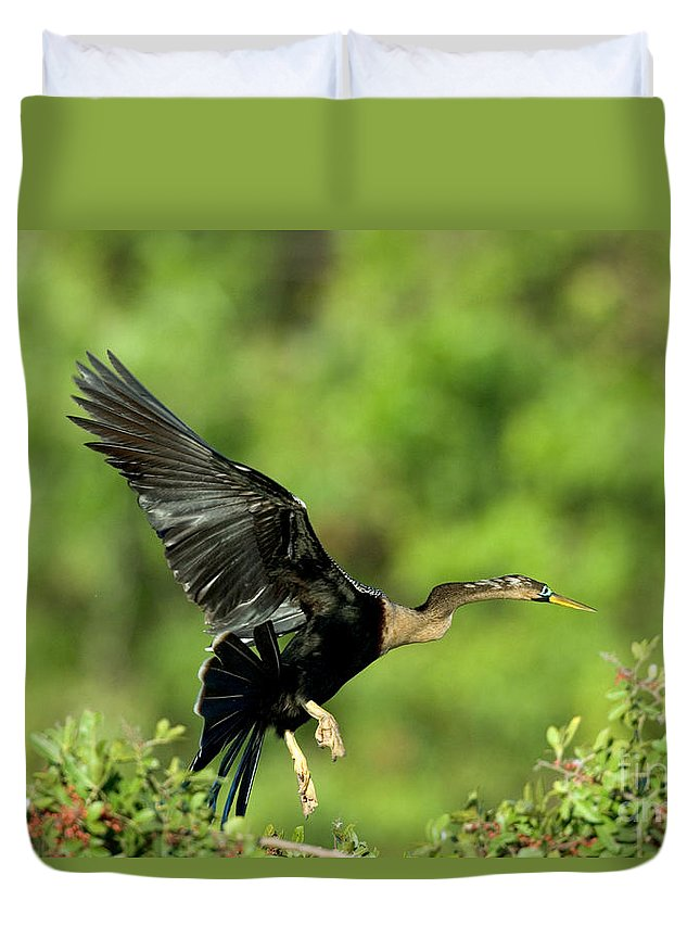 Darter Duvet Cover featuring the photograph Anhinga Taking Off by Anthony Mercieca